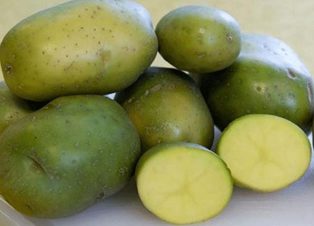 Позеленели картофи